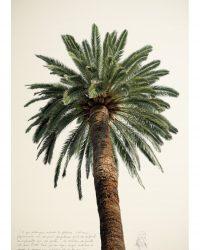 Grand palmier 2