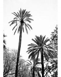 Grands palmiers 2