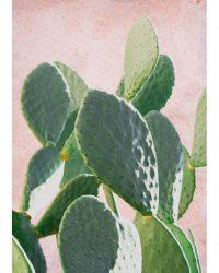 Plants ont Pink, Figuier de Barbarie