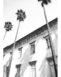 Architectural Palm Trees
