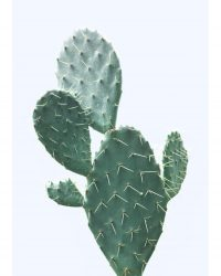 Plant on Blue, Cactus