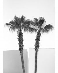 Minimal Palm Trees B&W