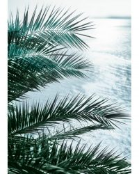 Seaside Palms 2