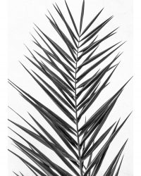 Palm Leaf B&W