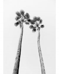 B&W Palm Trees 2