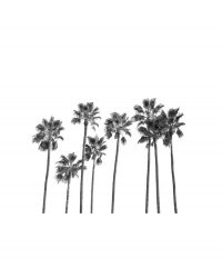 Black Palm Trees 2