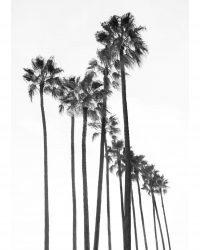 Black Palm Trees 1