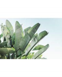 Banana Leaves 1