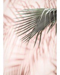 Pinlk Palm 2