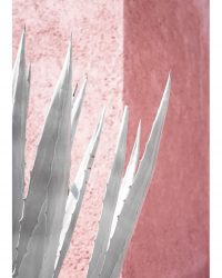 Agave ont Pink