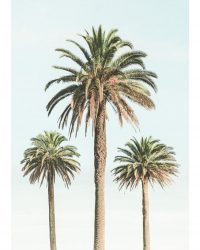 3 Palmiers vintages