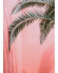 Palme on Pink 2