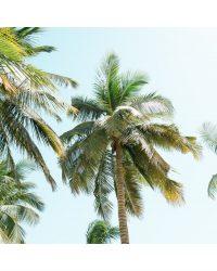 Sénégalaise Palms