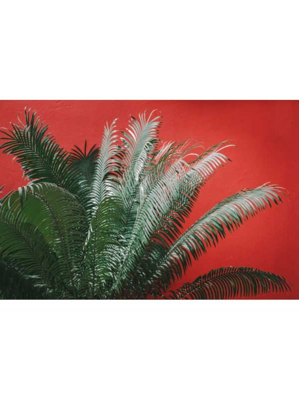 Palmes rouges