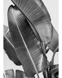 Banana Leaves - Noir et Blanc